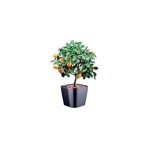 Tescoma samozavlažovací kvetináč SENSE vyobraziť